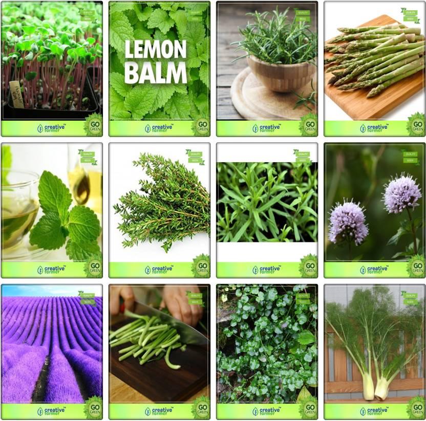 Creative Farmer Easy To Grow Herbs Seeds Combo Cress Common