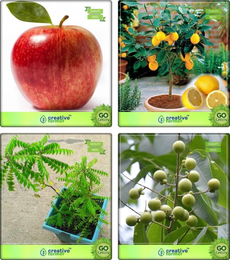 Creative Farmer Seeds For Garden In Home Apple Citrus Seeds Murraya