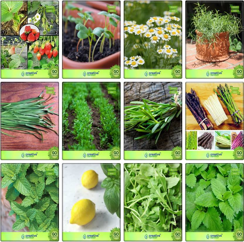 Creative Farmer Combo For Herb Seeds Alpine Strawberry, Cress Common