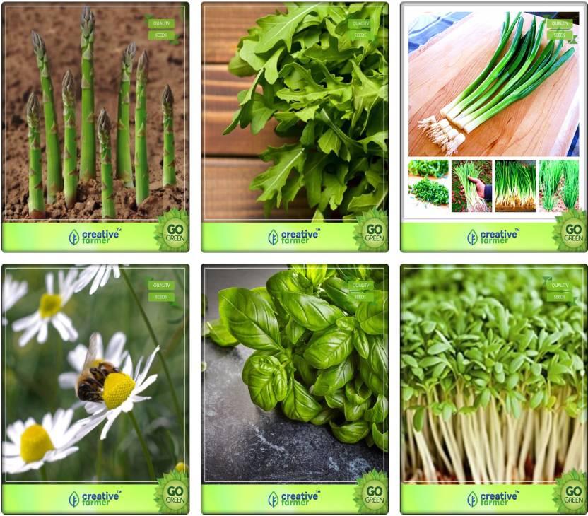 Creative Farmer Herbal Plants Seeds For Home Garden Asparagus, Wild