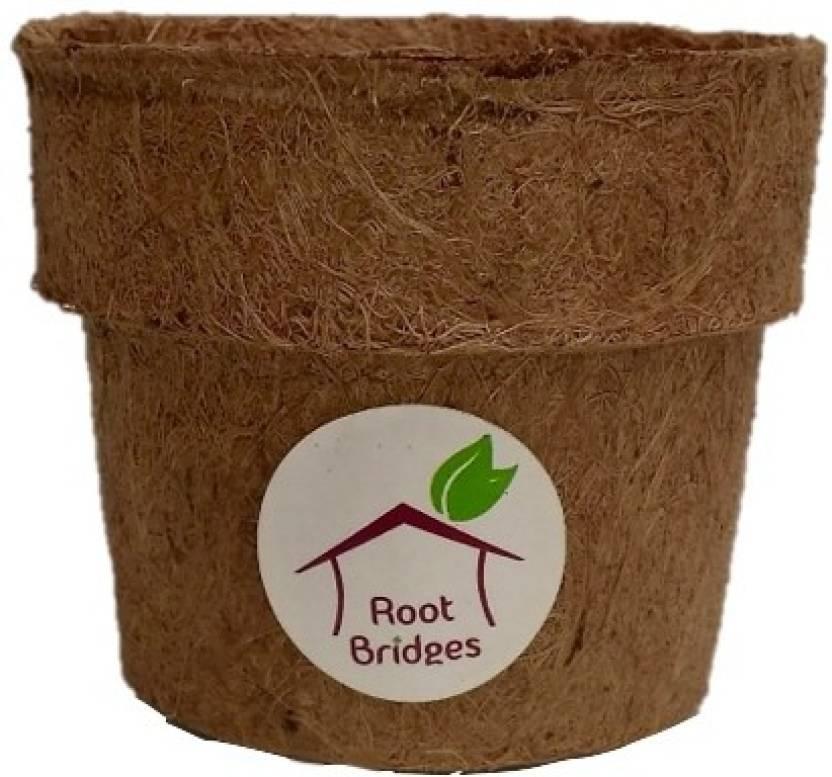 Root Bridges 4