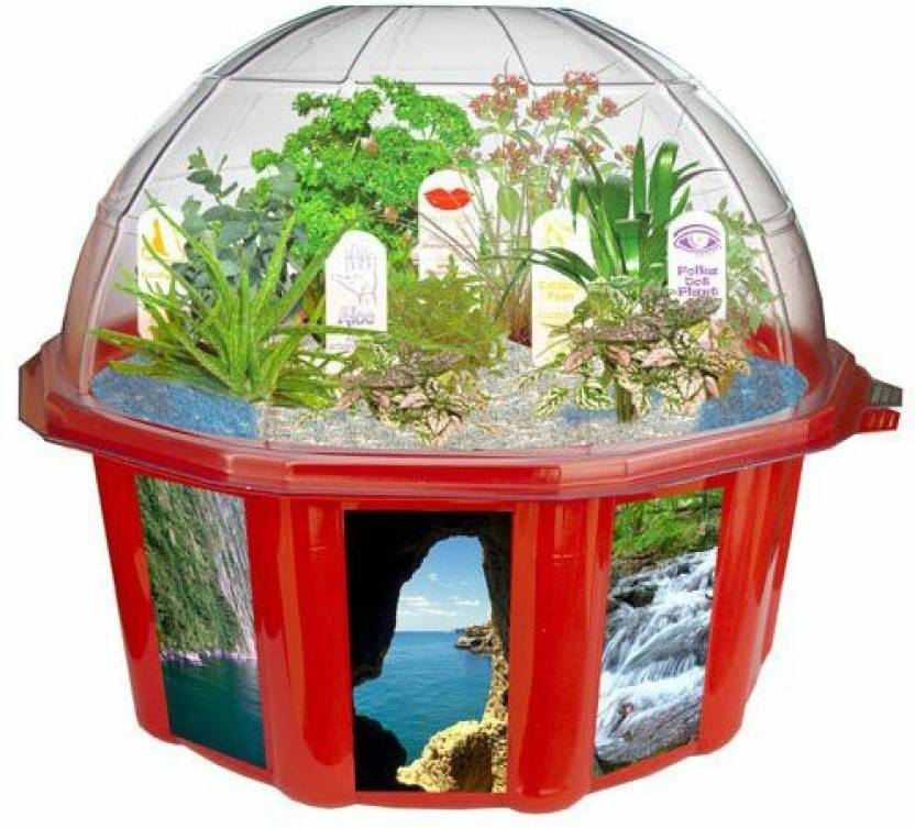 Dunecraft Dome Terrariums Exotic And Fun Plants From Around The