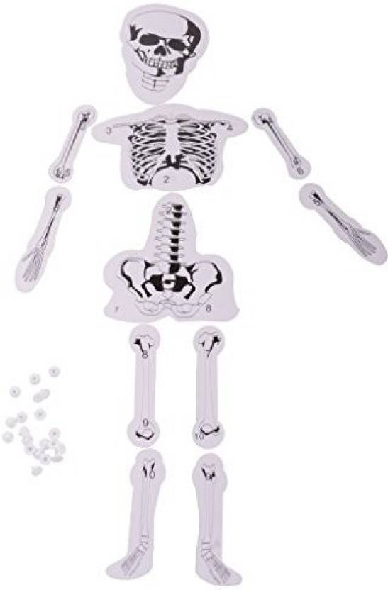Magideal Diy Assembled Human Skeleton Bone Structure Science ...
