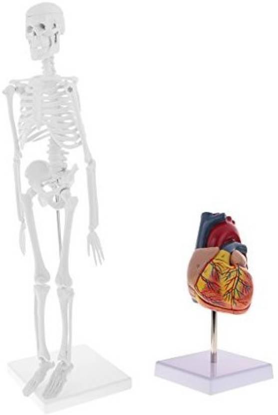 Monkeyjack 45cm Simulation Human Body Skeleton Model Lifesize