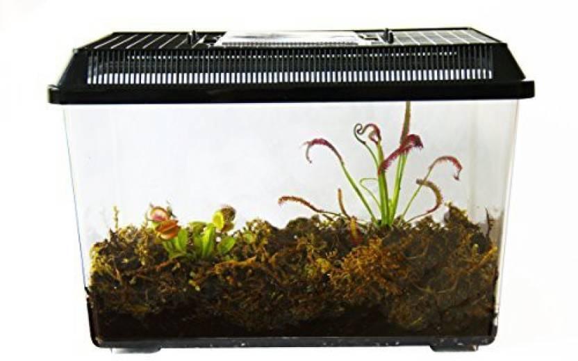 Generic 2 Live Adult Carnivorous Plants In Deluxe Terrarium Venus
