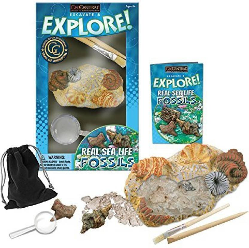 GeoCentral Excavation Dig Kit - Fossils Price in India - Buy