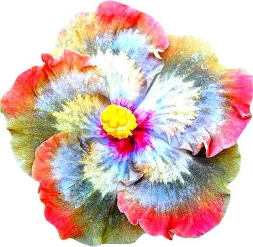 ELIF Rainbow Giant Hibiscus Flower Seed