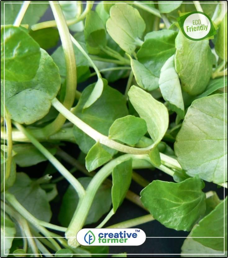 Creative Farmer Indian Cress Herb Seeds For Home Garden Kitchen