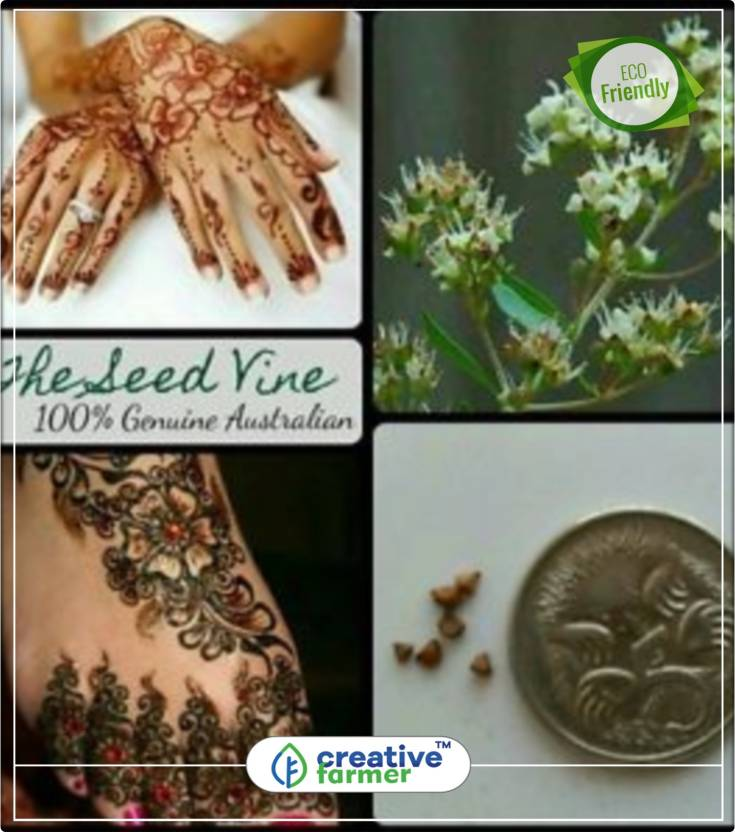 Creative Farmer Cypress Shrub Mehendi Henna Tree Flowering Plant