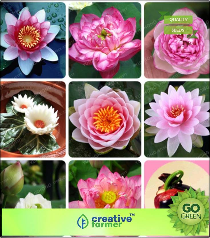 Creative Farmer Lotus Flower Seeds Mixed Varieties Seed Price In
