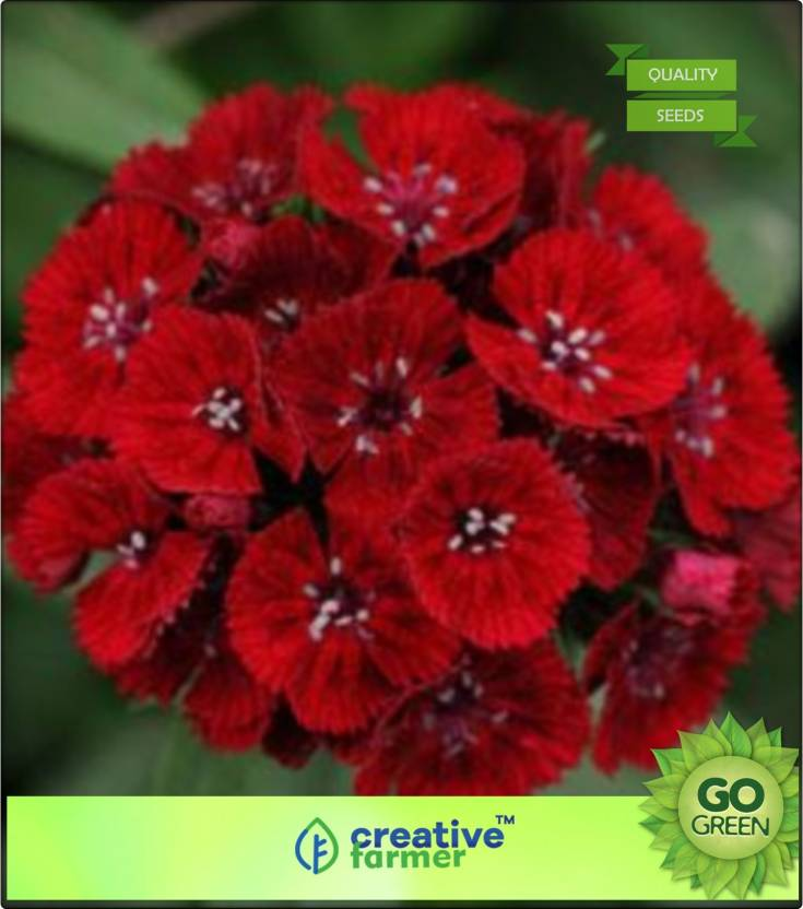 742579b98cdd Creative Farmer Dianthus Dianthus Brilliant Seed Price in India ...