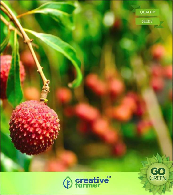 Creative Farmer Lychee (Litchi Or Letchi) Seed Price in