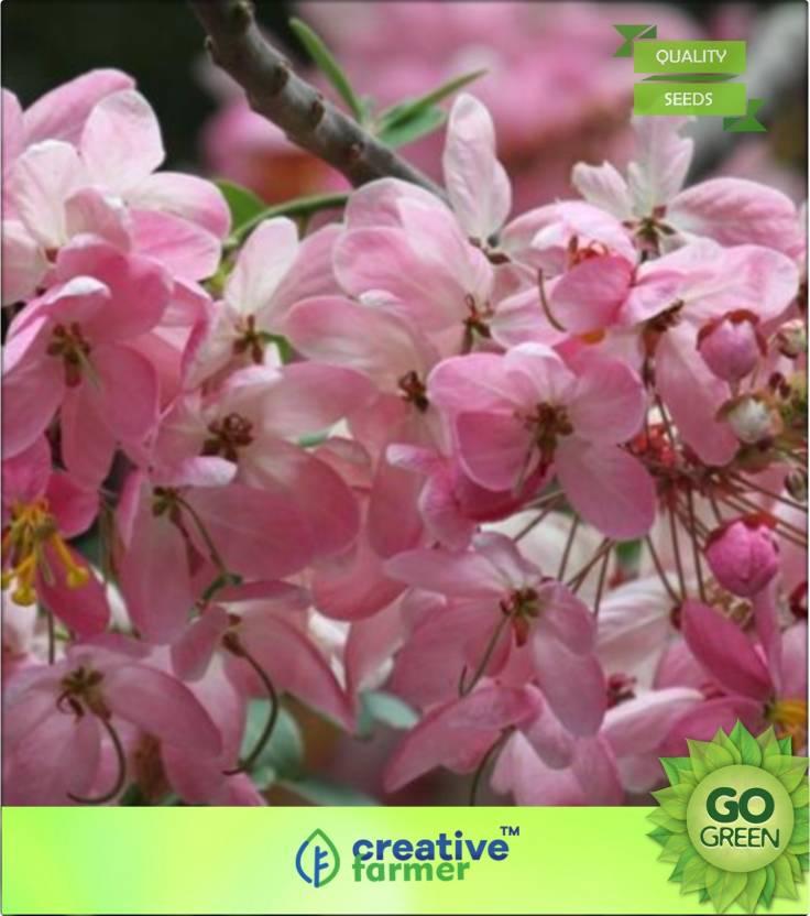 Creative Farmer Rainbow Shower Tree Seed Price in India