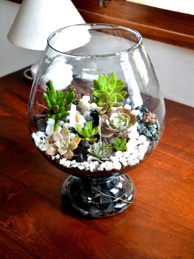 Mudfingers Wine Goblet Terrarium Bangalore Only Plant Price In