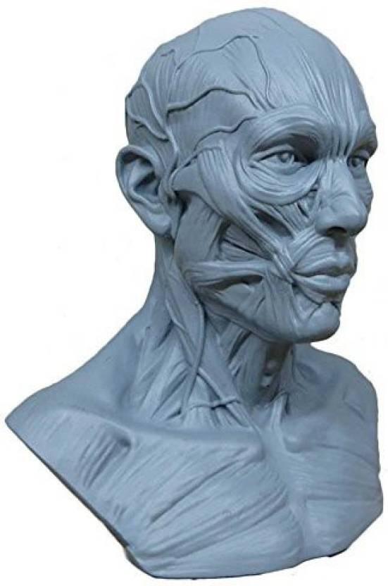 Airgoesin Human Model Craft Anatomy Skull Head Muscle Bone Medical
