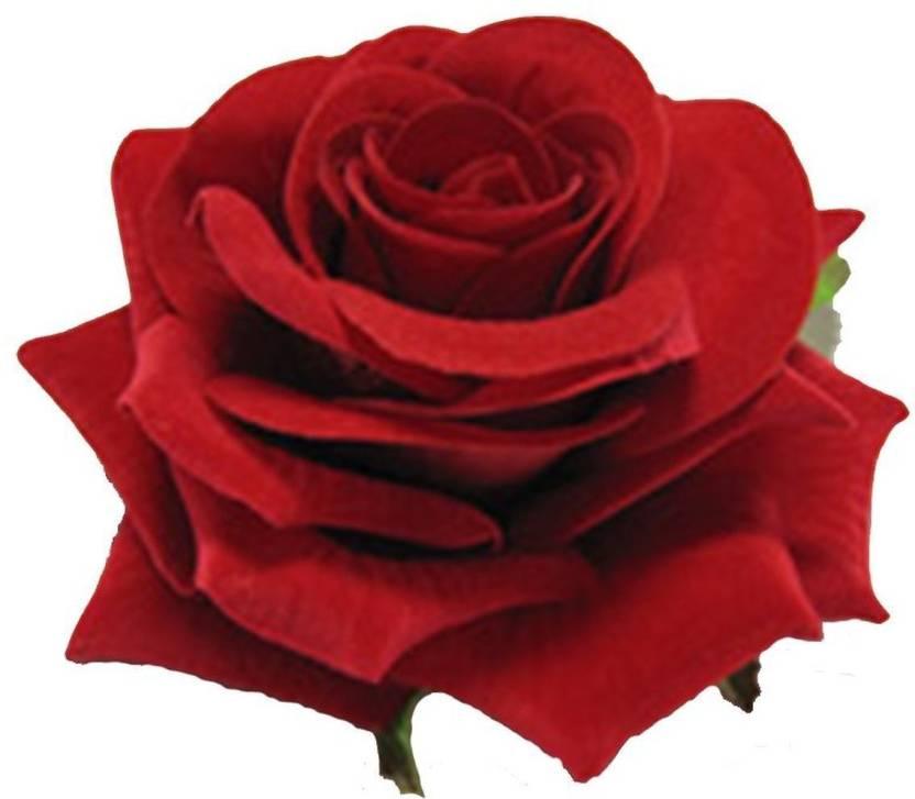 Album di laurea Shetland portatori di handicap  cbcollection Red Velvet Rose Hair Flower Clip and Pin Brooch (Pack ...