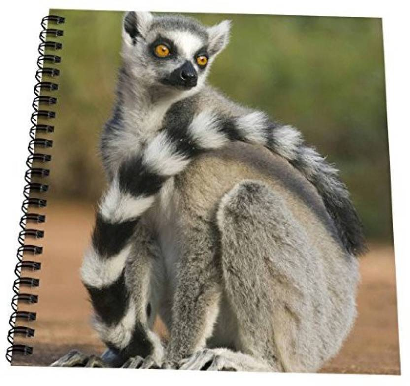b46f0db166 3dRose db 72864 1 Ring tailed Lemur