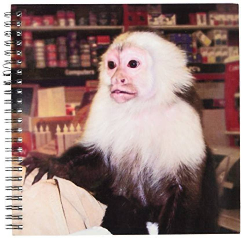 3dRose db_155919_1 Capuchin Monkey in Store Photograph