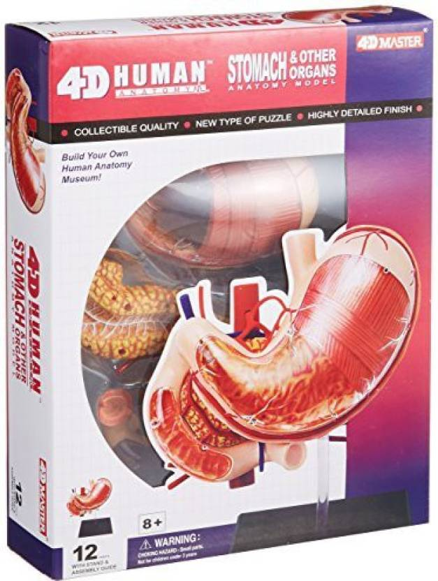Aoshima No09 Stomach Anatomy Model Skynet Three Dimensional Puzzle