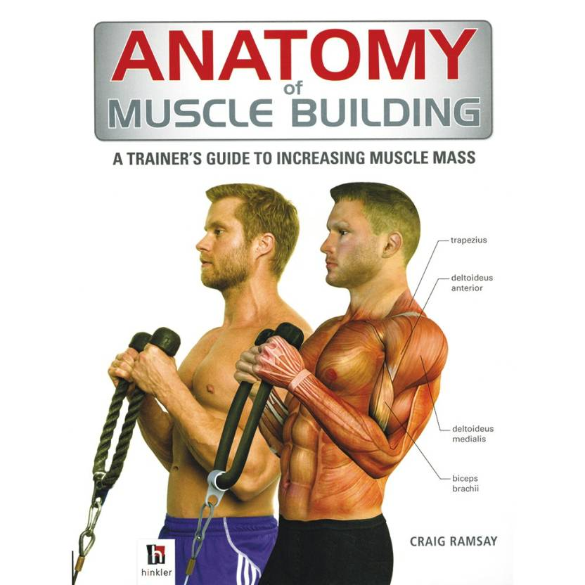 Anatomy Of Muscle Building A Trainerss Guide To Increasing Muscle
