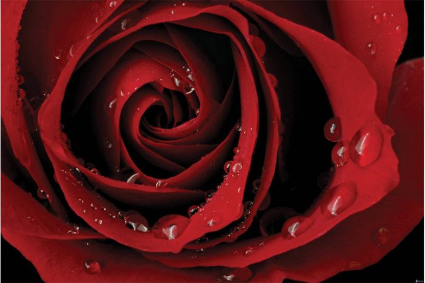 love forever rose Poster Paper Print - Decorative posters in