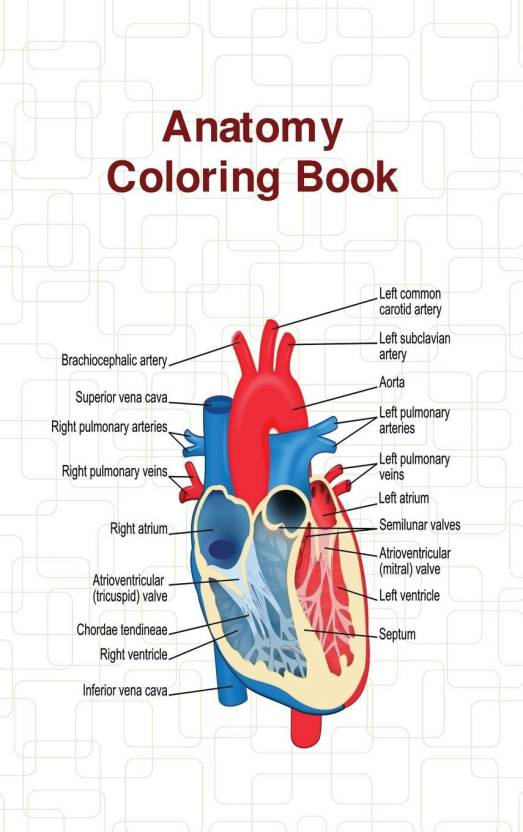 Anatomy Coloring Book: Buy Anatomy Coloring Book by Wise at Low ...