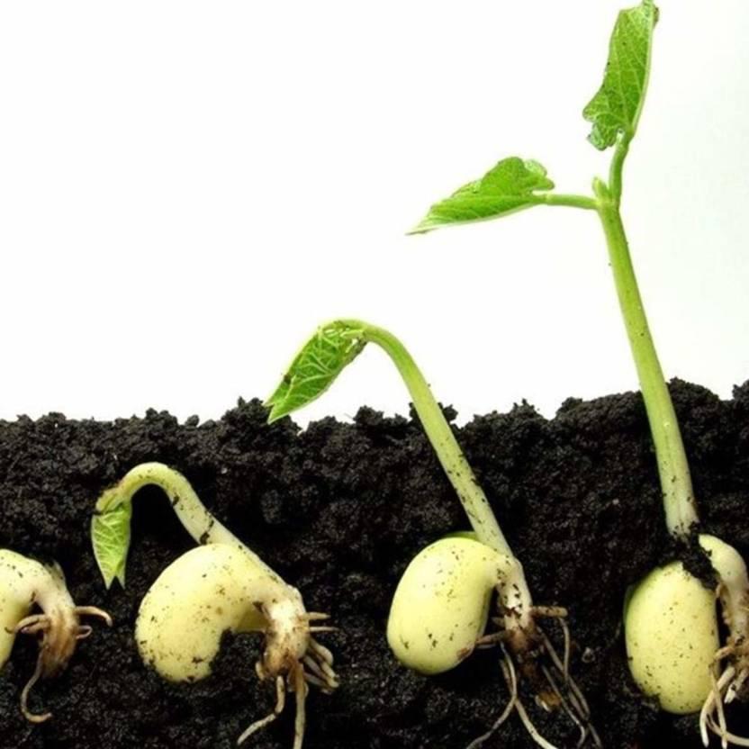 Homemade Organic Fertilizer Neem Fertilizer 5kg Soil Manure (4900 g Granules)