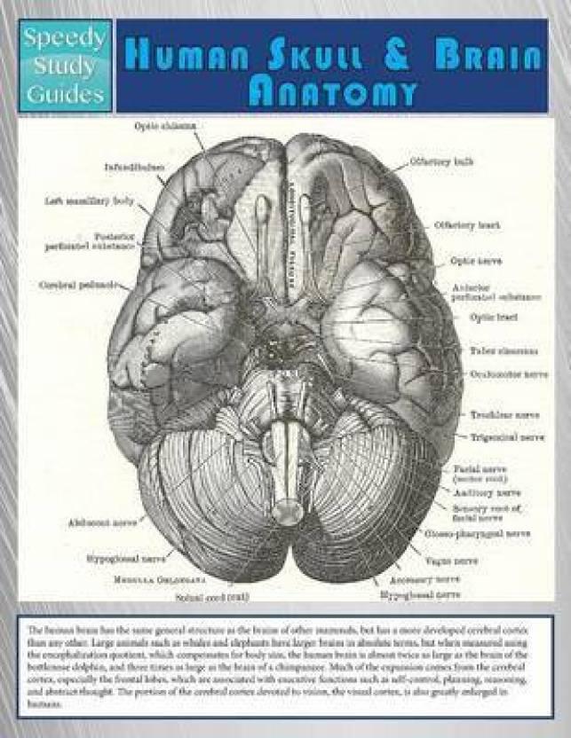 Human Skull And Brain Anatomy Speedy Study Guide Buy Human Skull