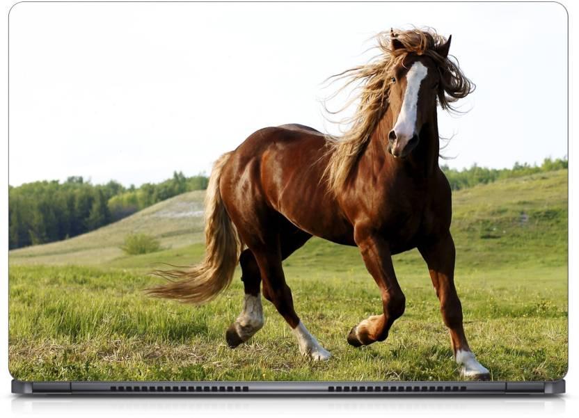 aaRJoo Beauty Brown Horse Vinyl Laptop Decal 15 6 Price in