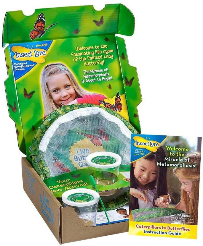 Insect Lore Original Butterfly Garden with Live Cups of Caterpillars ...