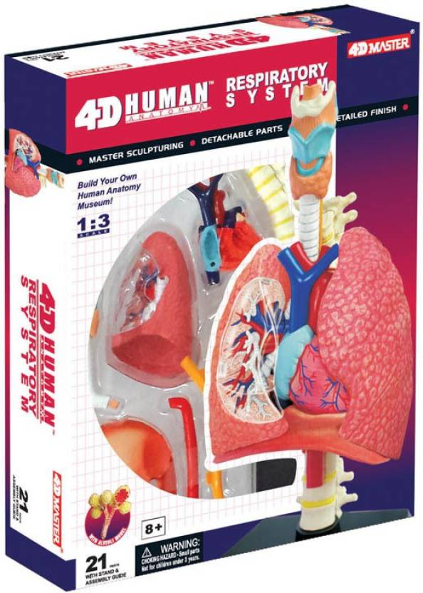 Tedco 4d Human Anatomy Respiratory System Model By Tedco Toys Price