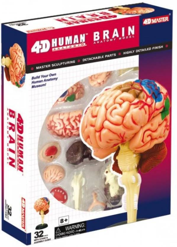 Tedco 4d Human Anatomy Brain Model By Tedco Toys Price In India