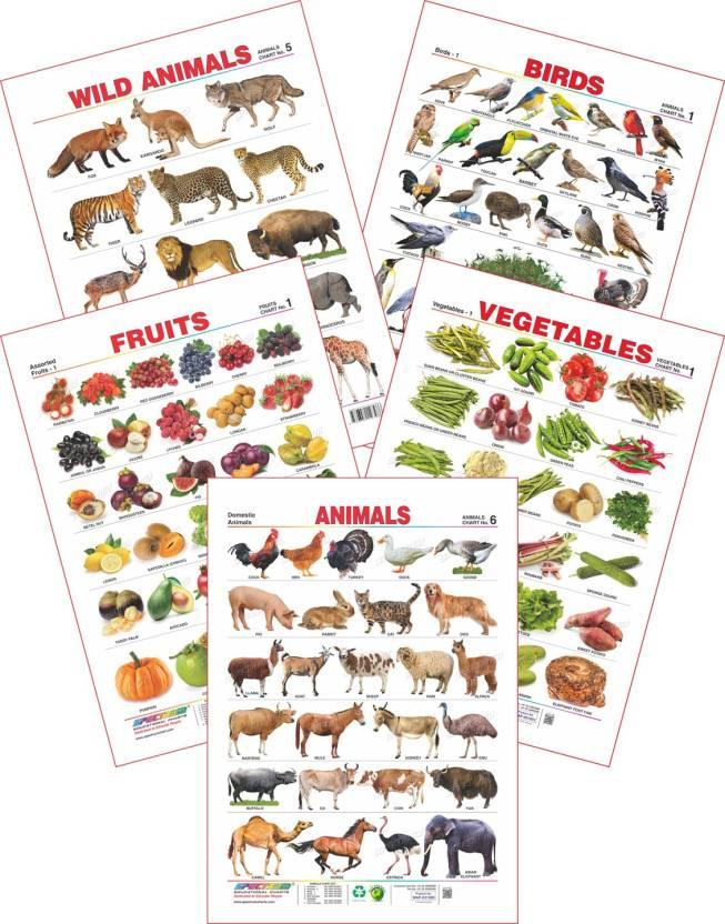 Spectrum Set of 5 Educational Wall Charts (Wild Animals, Birds