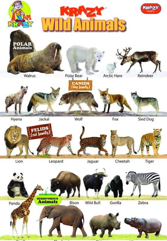 Toy Names A Z : Mind wealth krazy wild animals chart price in india buy