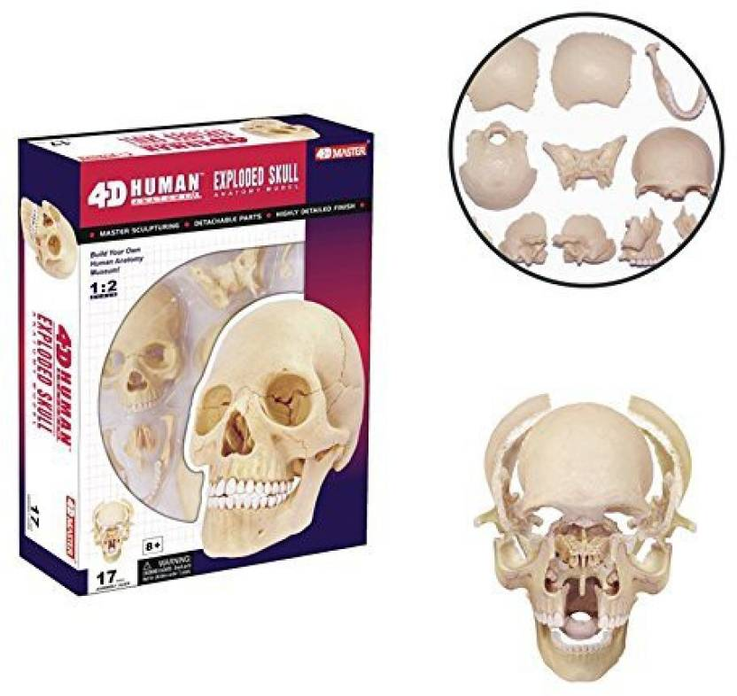 4d Master 26086 Human Anatomy Exploded Skull Model 3d Puzzle One
