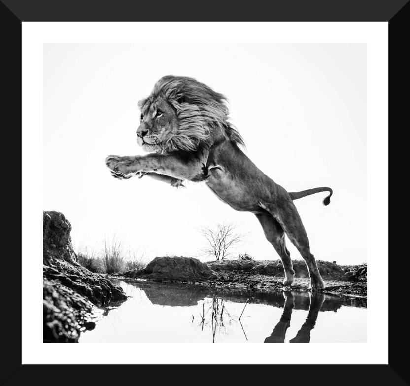 Tallenge Majestic Lion Wildlife Collection Framed A3