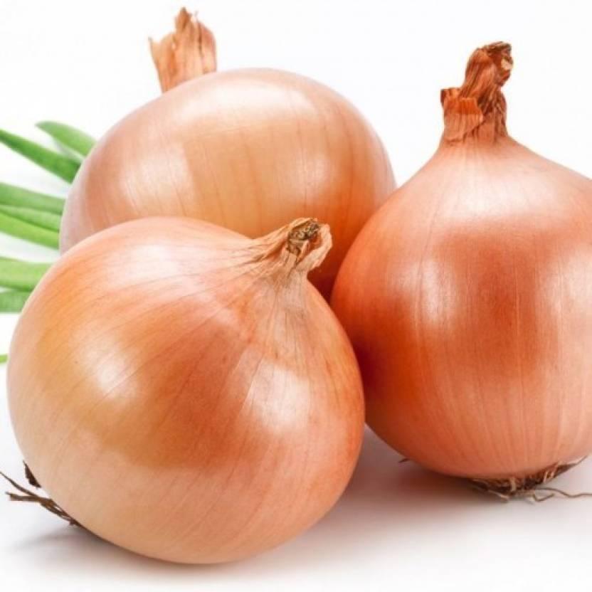 Omaxe Onion Improved Gavran 50seeds*4pkts Seed