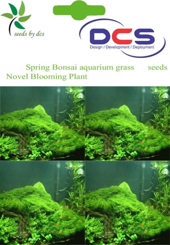 DCS Aquarium grass Seed Price in India - Buy DCS Aquarium grass Seed