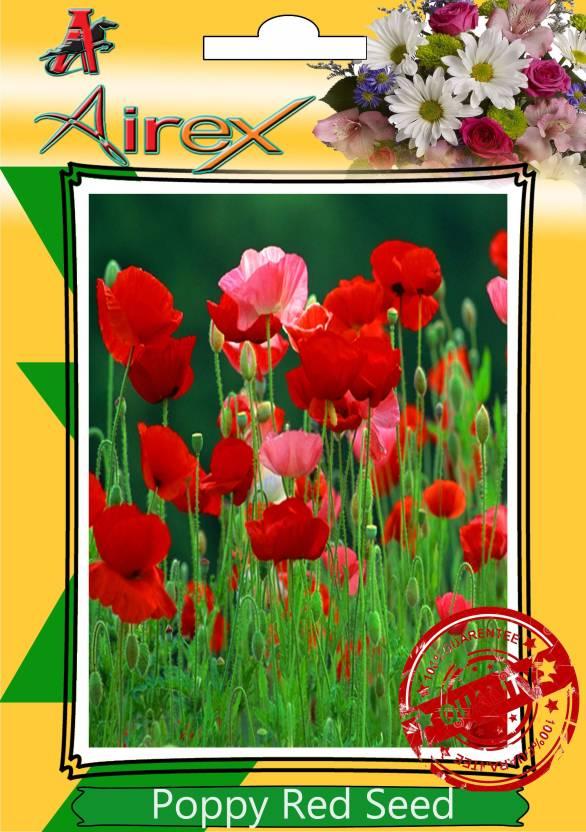 Airex corn poppy red poppy flanders poppy seed price in india airex corn poppy red poppy flanders poppy seed mightylinksfo