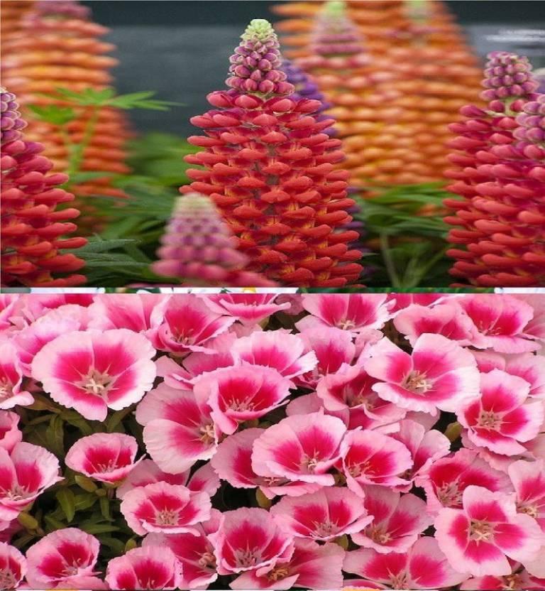 Vsquare Retail Beautiful Combo 2 Types Winter Season Flower