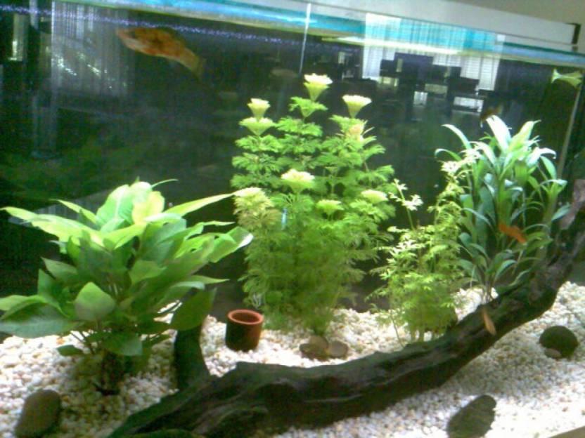 Vasu World Aquarium Tree Plant Seeds Seed Price in India