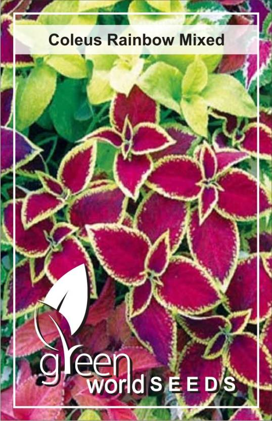 Green World Coleus Rainbow Mixed Seed Price In India Buy Green
