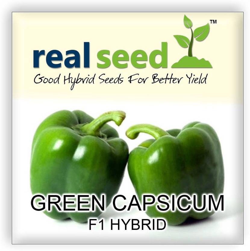 Real Seed Purple Capsicum F1 Hybrid Imported Premium Vegetable Seed