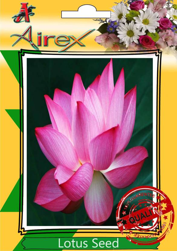 Airex Lotus Flower Seed Price In India Buy Airex Lotus Flower Seed