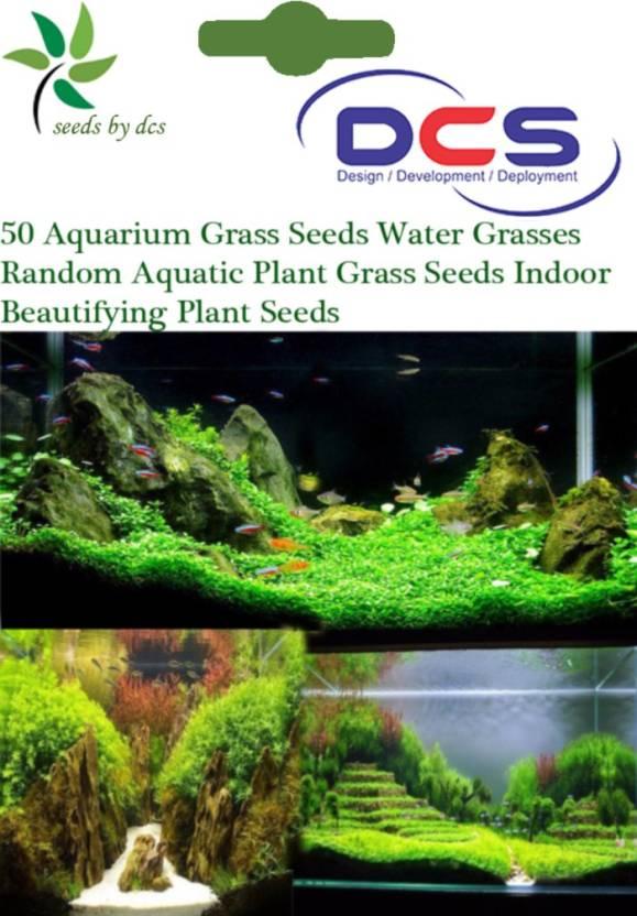DCS Aquarium Grass Seed Price in India - Buy DCS Aquarium