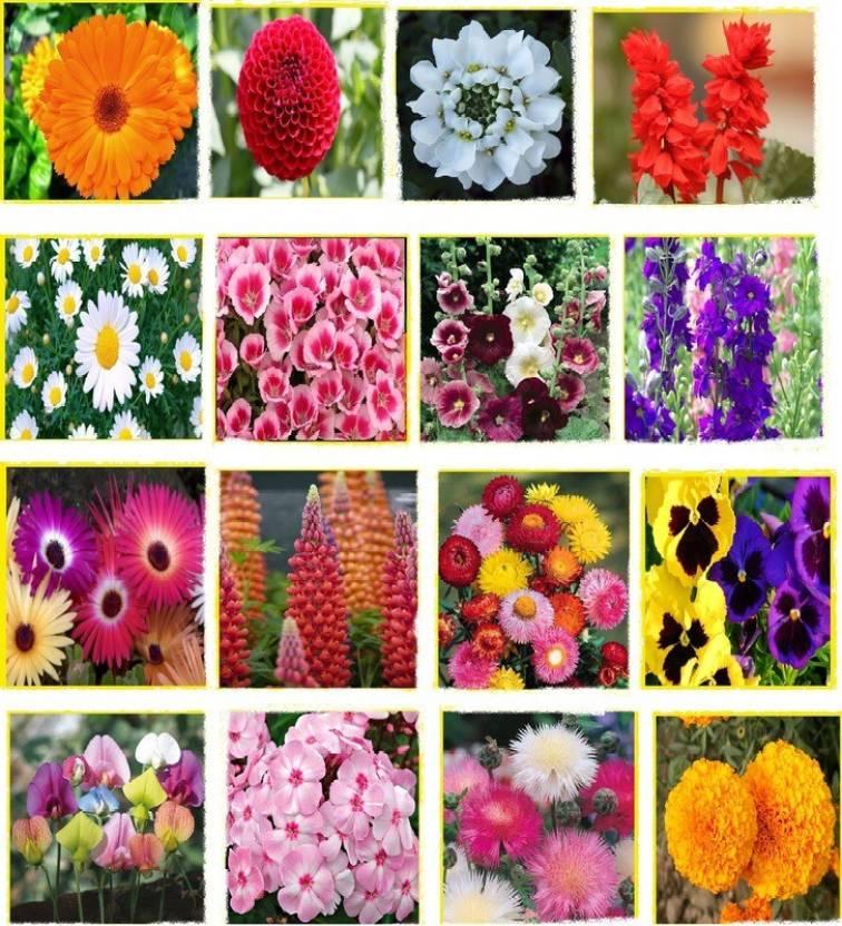 Vsquare Retail Beautiful Combo 16 Types Winter Season Flower Plant Seed