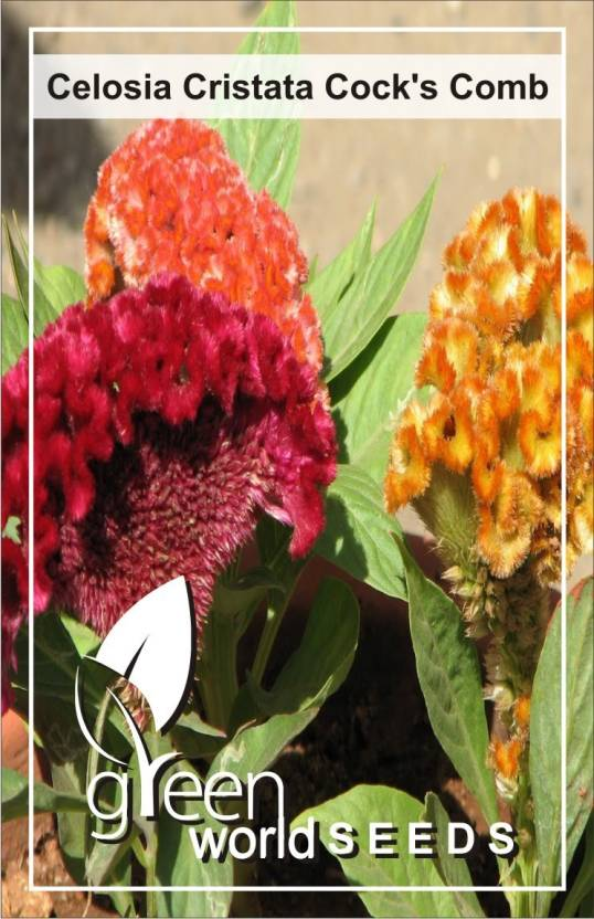 Green World Celosia Cristata Cock S Comb Seed Price In India Buy