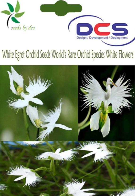 Dcs white egret orchid flower seeds seed price in india buy dcs dcs white egret orchid flower seeds seed mightylinksfo