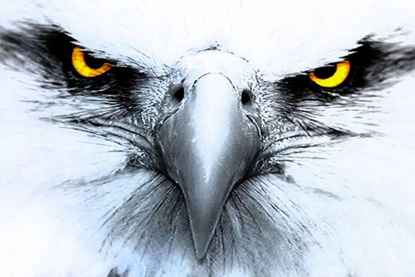 Eagle Eye Paper Print 18 Inch X 12 Rolled