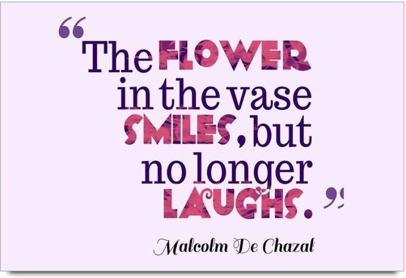 Imerch Flower In The Vase Quotes By Malcolm De Chazal Photographic